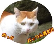 6_20110503114442.jpg