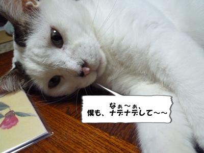 6_20111103001406.jpg