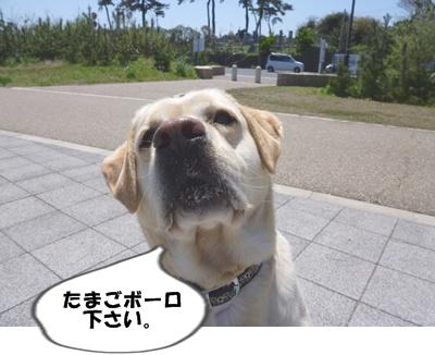 7_20100425170712.jpg