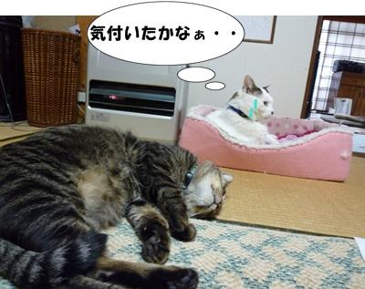 7_20100510203827.jpg