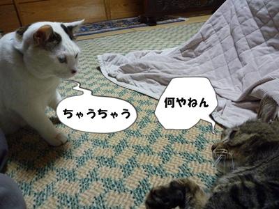 7_20100531232609.jpg