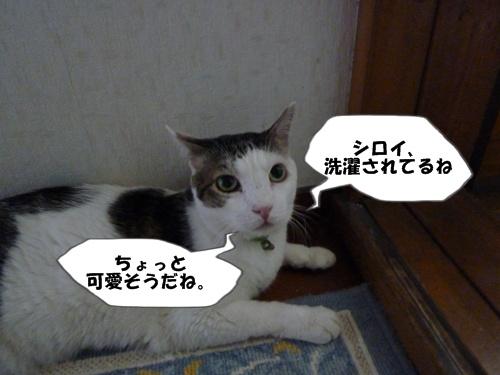 7_20100728222912.jpg