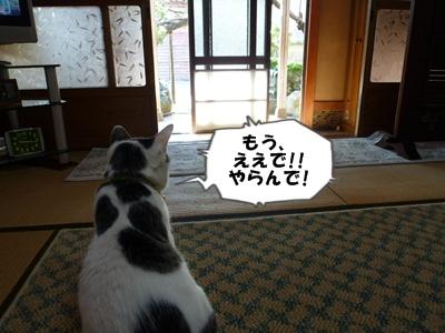 7_20101015140321.jpg