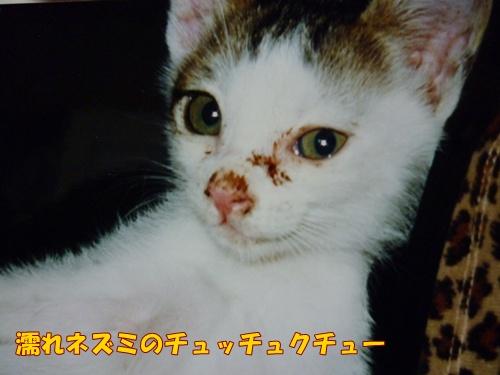 7_20101127111620.jpg