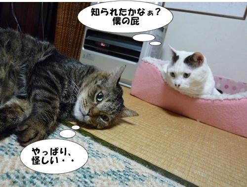 8_20100510203827.jpg
