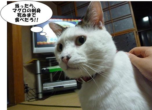 8_20100719133021.jpg