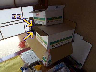 8_20101006114433.jpg