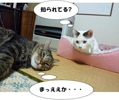 9_20100510203827.jpg