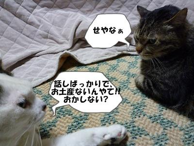 9_20100531232556.jpg