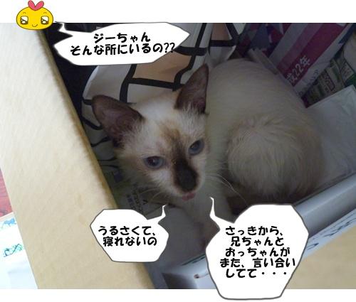 9_20101006114433.jpg