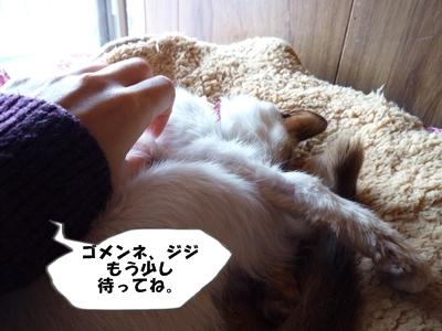 9_20110116111254.jpg