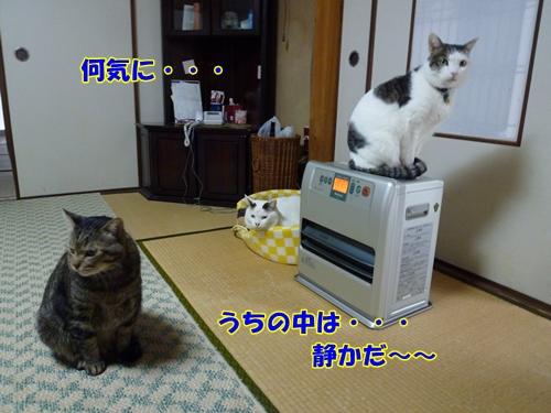 9_20110425122714.jpg