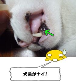 9_20111103001517.jpg