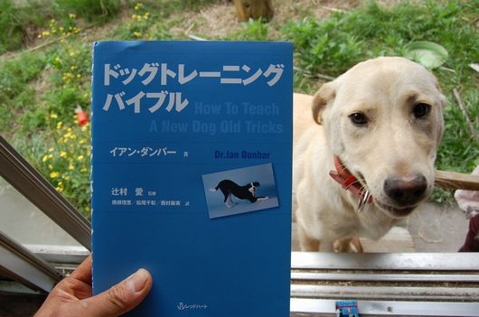 dog training bible