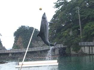 下田水族館 (7)