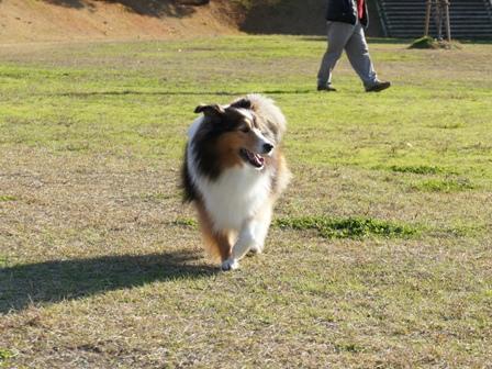 有馬富士公園 (11)