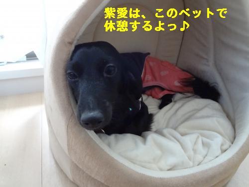DSC03813_convert_20120311232142☆
