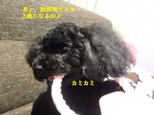 DSC03388_convert_20120130212816.jpg