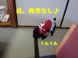 DSC03678_convert_20120228215639.jpg