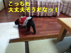 DSC03679_convert_20120228215823.jpg