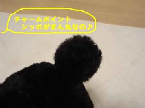 DSC03806_convert_20120310134746.jpg