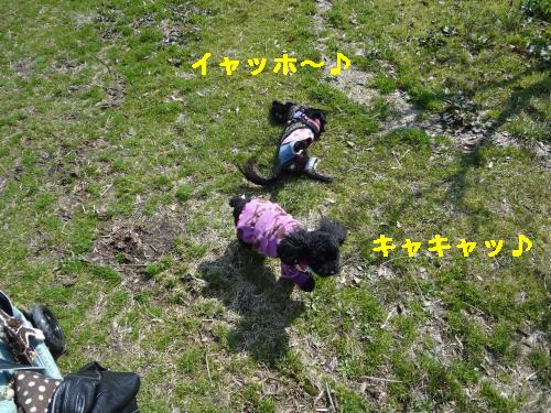 DSC03912_convert_20120314211832.jpg