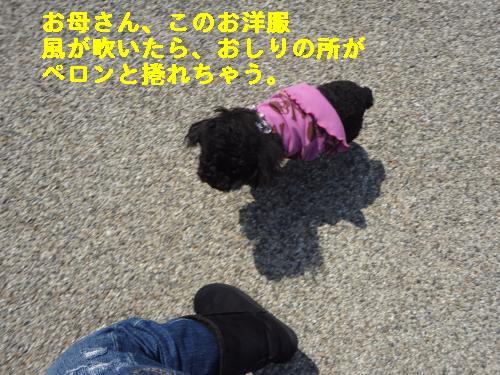 DSC03921_convert_20120314220444.jpg