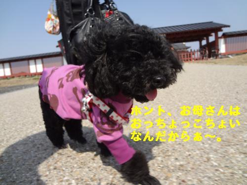 DSC03934_convert_20120314213103.jpg