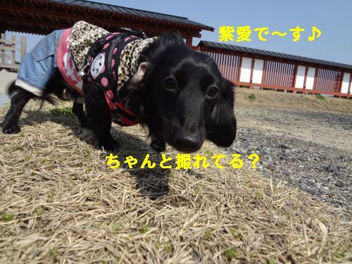 DSC03939_convert_20120314213421.jpg
