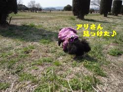 DSC03951_convert_20120314214313.jpg