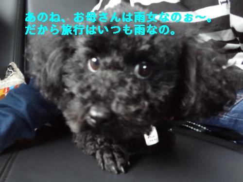 DSC04052_convert_20120321210531.jpg