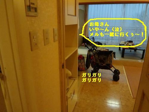 DSC04146_convert_20120325185409.jpg
