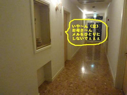 DSC04147_convert_20120325171829.jpg