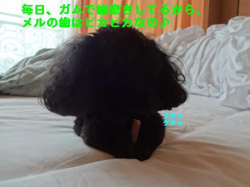 DSC04190_convert_20120325211836.jpg