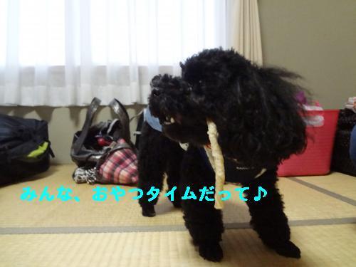 DSC04417_convert_20120408213155.jpg