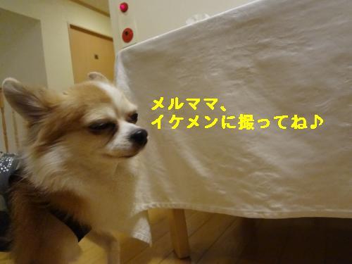 DSC04425_convert_20120408213255.jpg