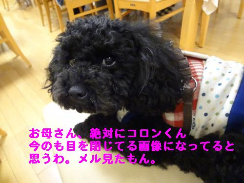 DSC04437_convert_20120408213858.jpg