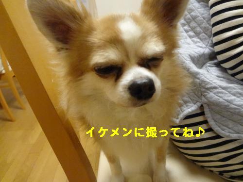 DSC04438_convert_20120408213951.jpg