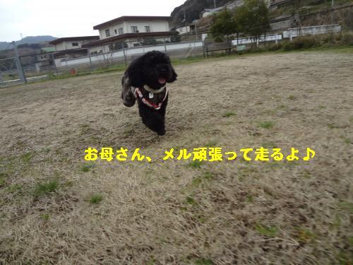 DSC04487_convert_20120410215754.jpg