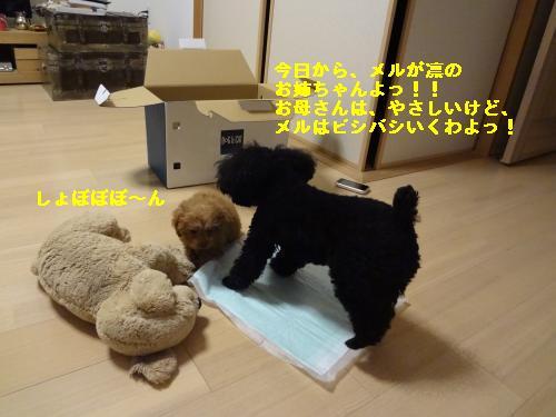 DSC04541_convert_20120401143345.jpg
