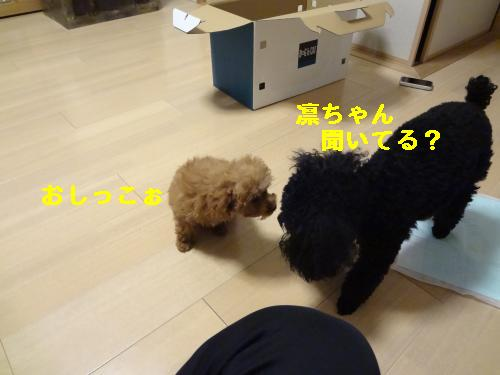 DSC04544_convert_20120401143436.jpg