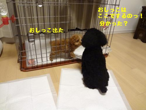 DSC04547_convert_20120401143751.jpg