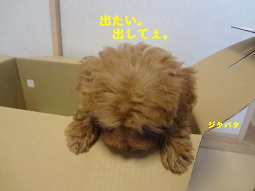 DSC04574_convert_20120401142408.jpg
