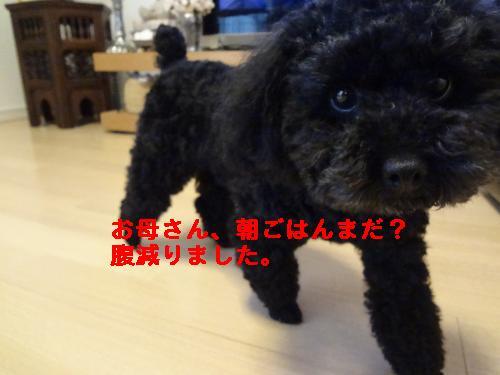 DSC04581_convert_20120407080923.jpg