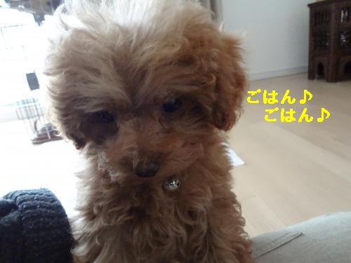 DSC04584_convert_20120407081116.jpg