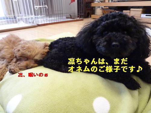 DSC04596_convert_20120407080411.jpg