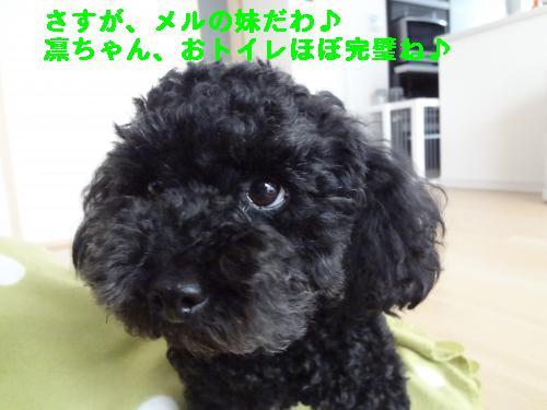 DSC04613_convert_20120407220632.jpg
