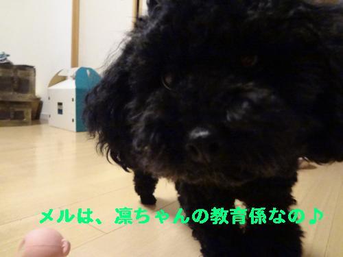 DSC04681_convert_20120407214049.jpg
