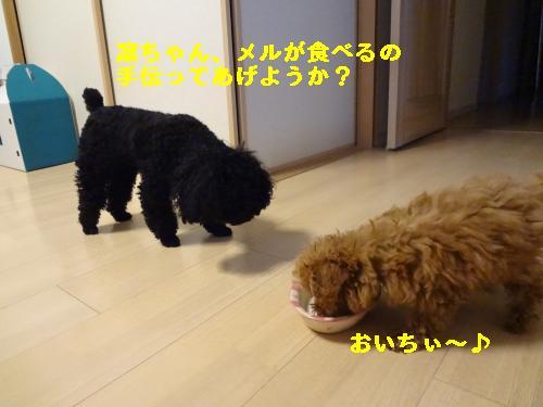 DSC04735_convert_20120407081503.jpg