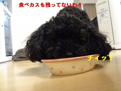 DSC04741_convert_20120407081950.jpg